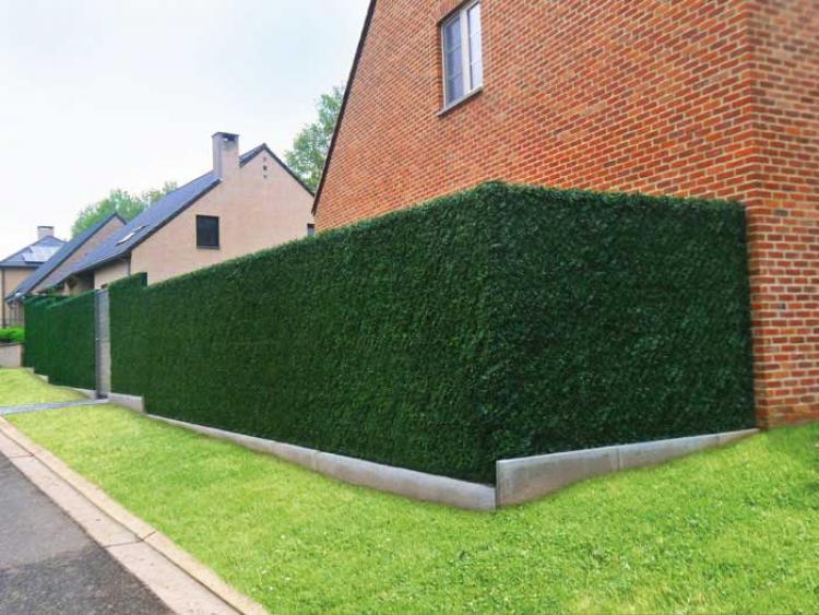 Realisations avec haies d 39 occultation de canada gmp for Cloture amovible jardin